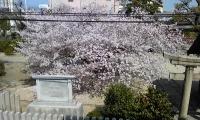 桜2階.jpg