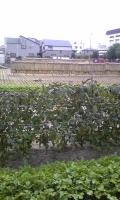 農化.jpg