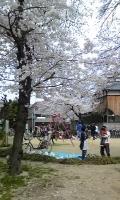 大桐の公園.jpg