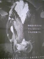 牛.jpg