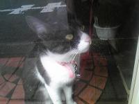 窓猫.jpg