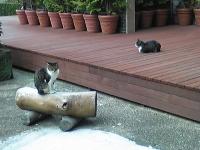 猫.jpg