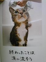 Image861.jpg