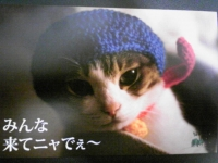 Image998.jpg
