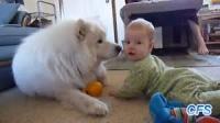 大型犬.png