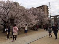 1桜.JPG