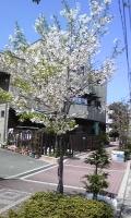 桜子.jpg