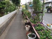 私設花壇.JPG