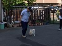 家庭犬検定.JPG