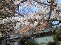大桐公園.jpg