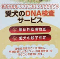 DNA検査.JPG