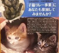 子猫リレー.JPG
