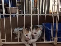 子猫3.JPG