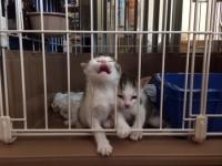 子猫4.JPG