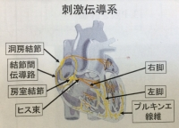 刺激電動系.JPG