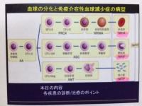 血球.JPG