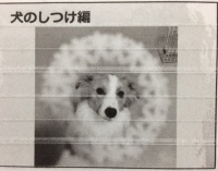 しつけ編.JPG
