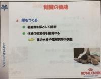 腎機能.JPG