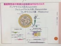 SFTSウイルス.JPG