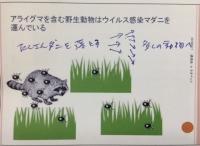 アライグマ.JPG