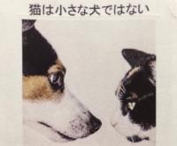 犬じゃない.JPG