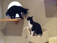 猫二匹.JPG