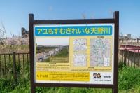 天野川.jpg